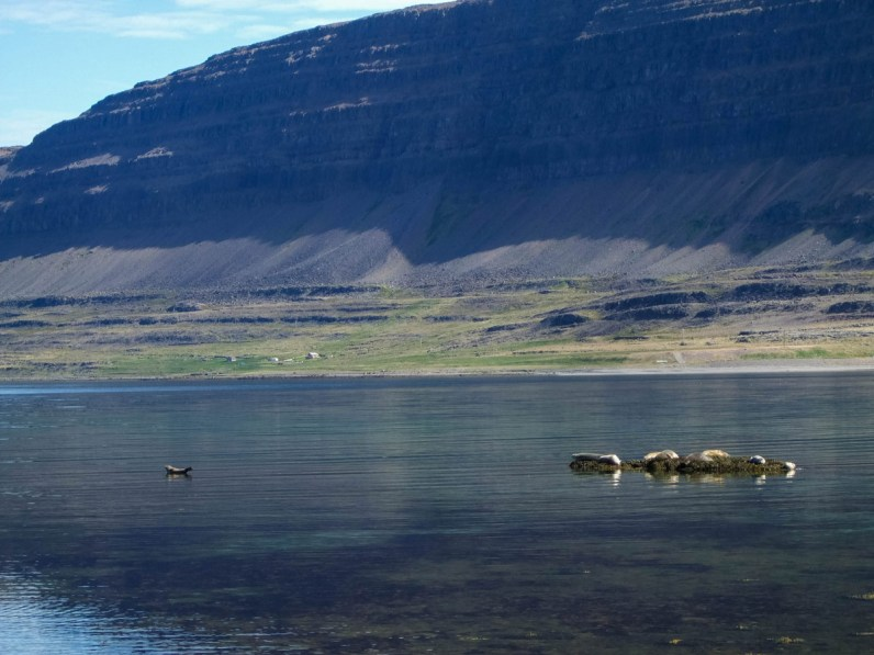 Seals basking in the sun - An Epic 14 Day Iceland Itinerary