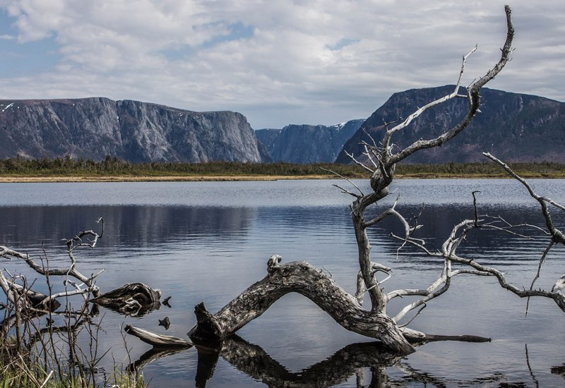 A gnarled tree lies dramatically in the water of Western Brook pond in Gros Morne National Park