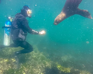A scuba diver comes face to face with a sea lion in Puerto Madryn, Argentina
