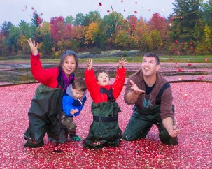 A family wearing hip waders throw cranberries from a cranberry bog up in the air at the Bala Cranberry Festival in Bala, Ontario