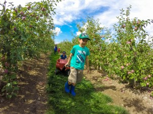 Two young boys push and pull a wagon full of apples in an orchard in Caledon, Ontario