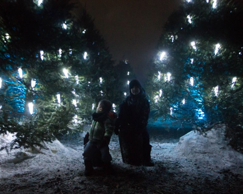 Pine trees with lights that look like icicles and two boys during Lumina Borealis Kingston
