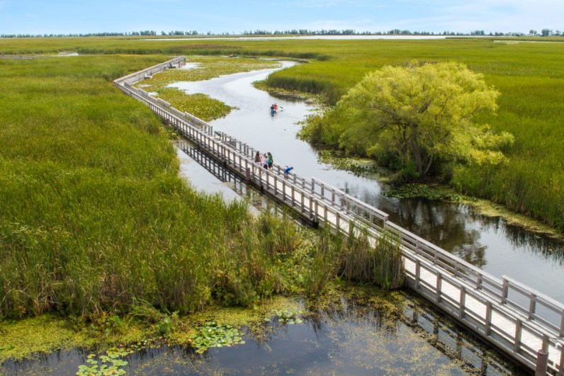 People walking on the boardwalk over marshland at Point Pelee National Park, one of the National Parks in Ontario.