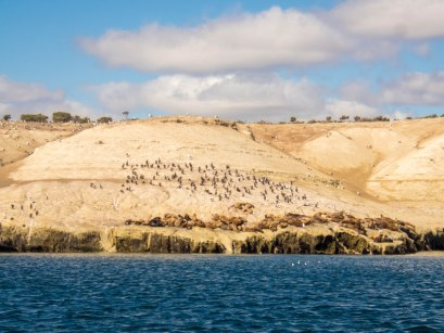 Sea lion colony as seen from the waters off of Punta Loma, Argentina.