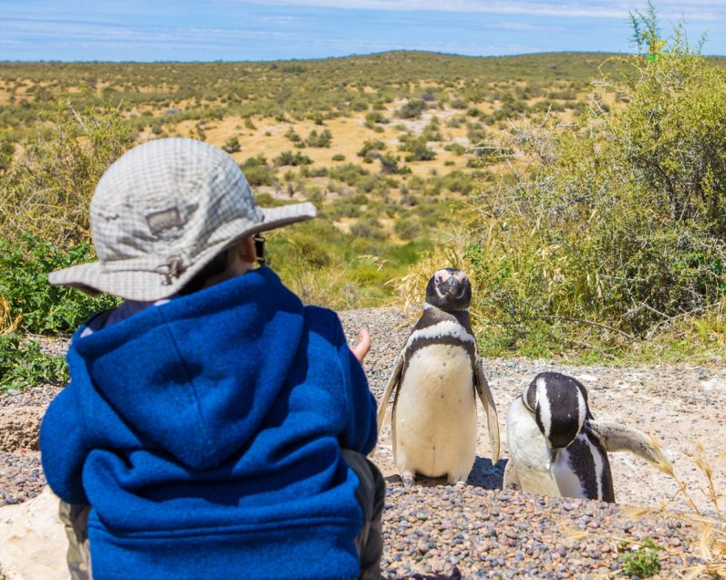 Boy watches penguins in Punta Tombo Penguin Rookery, a fantastic place to visit when in Puerto Madryn with kids.