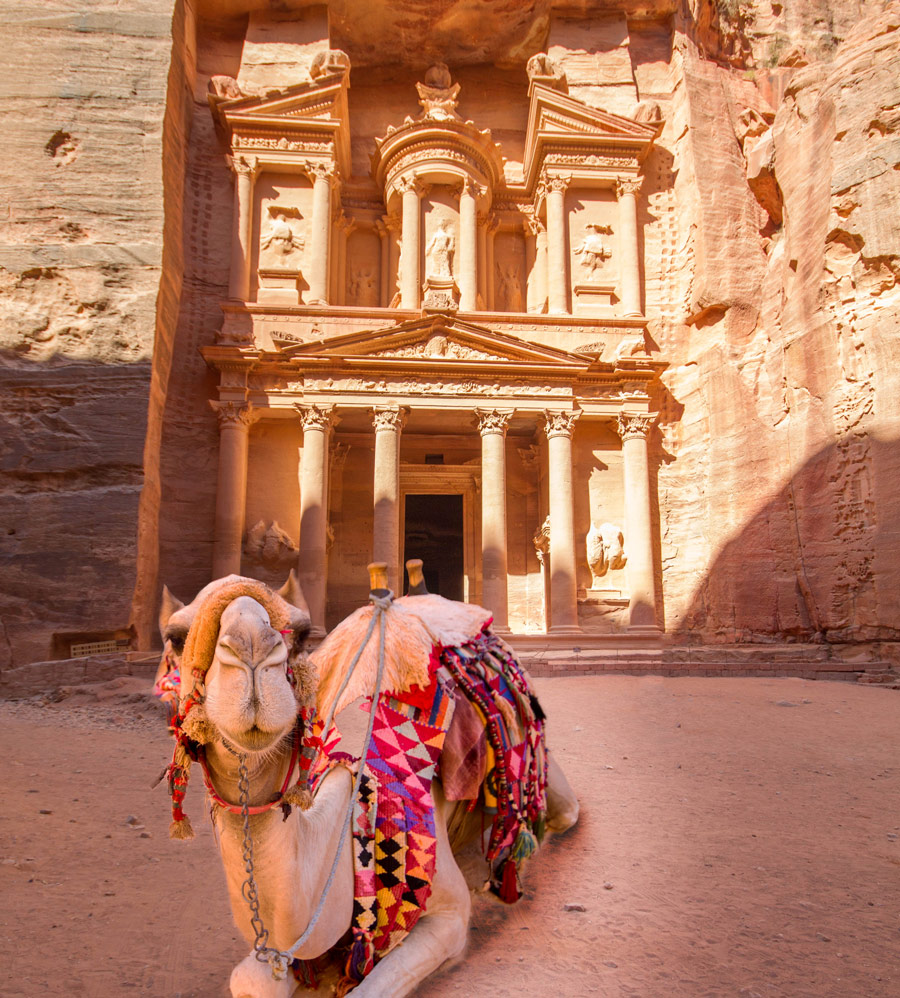 A camel relaxes in front of the Treasury building in Petra Jordan