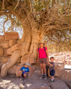 A mother and two boys stand in the shade of an 800 year-old pistachio tree in Petra Jordan
