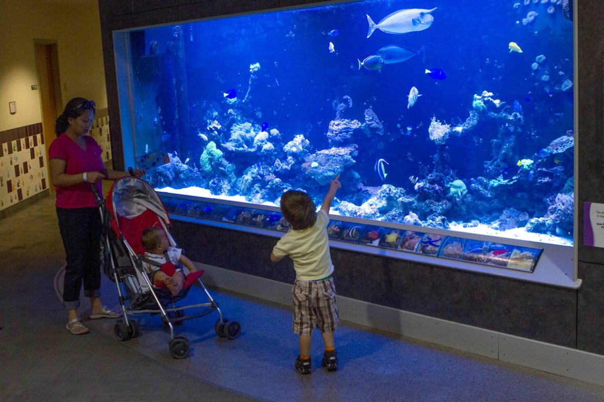Aquarium in the Strong Museum of Play entertains kids on a long weekend visit to the Finger Lakes with kids.