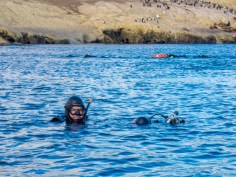 Two SCUBA divers begin to sink below the surface as they Scuba diving with sea lions in Punta Loma