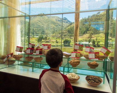 A young boy explores a small museum in Siquani Peru on the Cusco to Puno bus tour with Inka Express