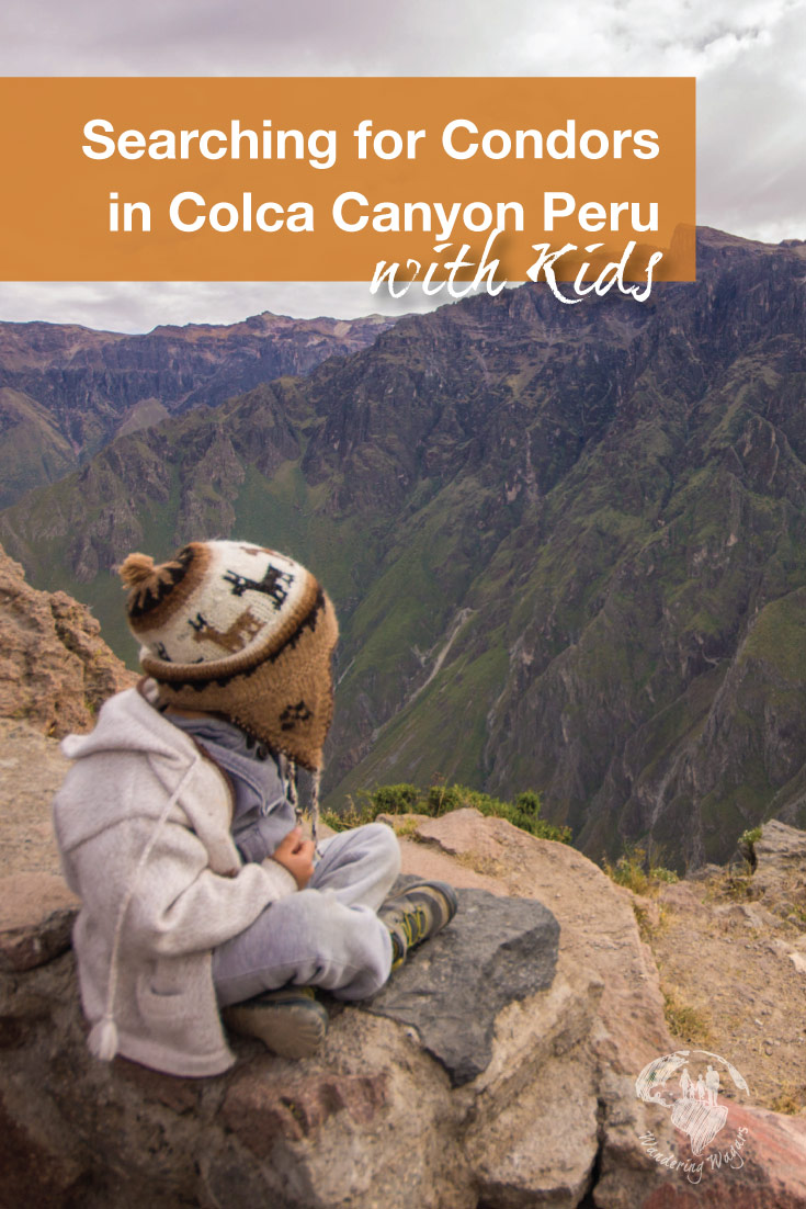 A chance to see the Andean Condors in Colca Canyon Peru with kids is one of those once in a lifetime experiences that you can't pass up!