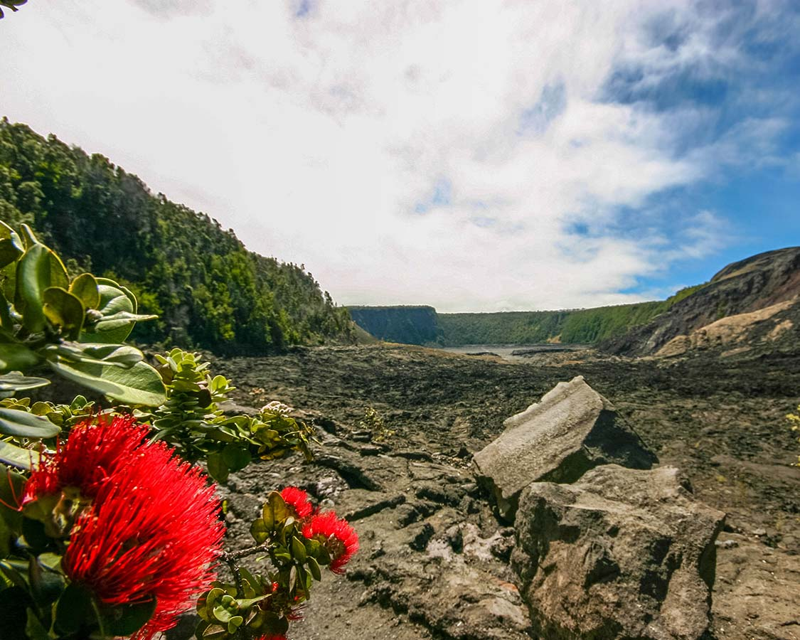 Flowers-grow-among-lava-rocks-in-Hawaii-Volcanoes-National-Park