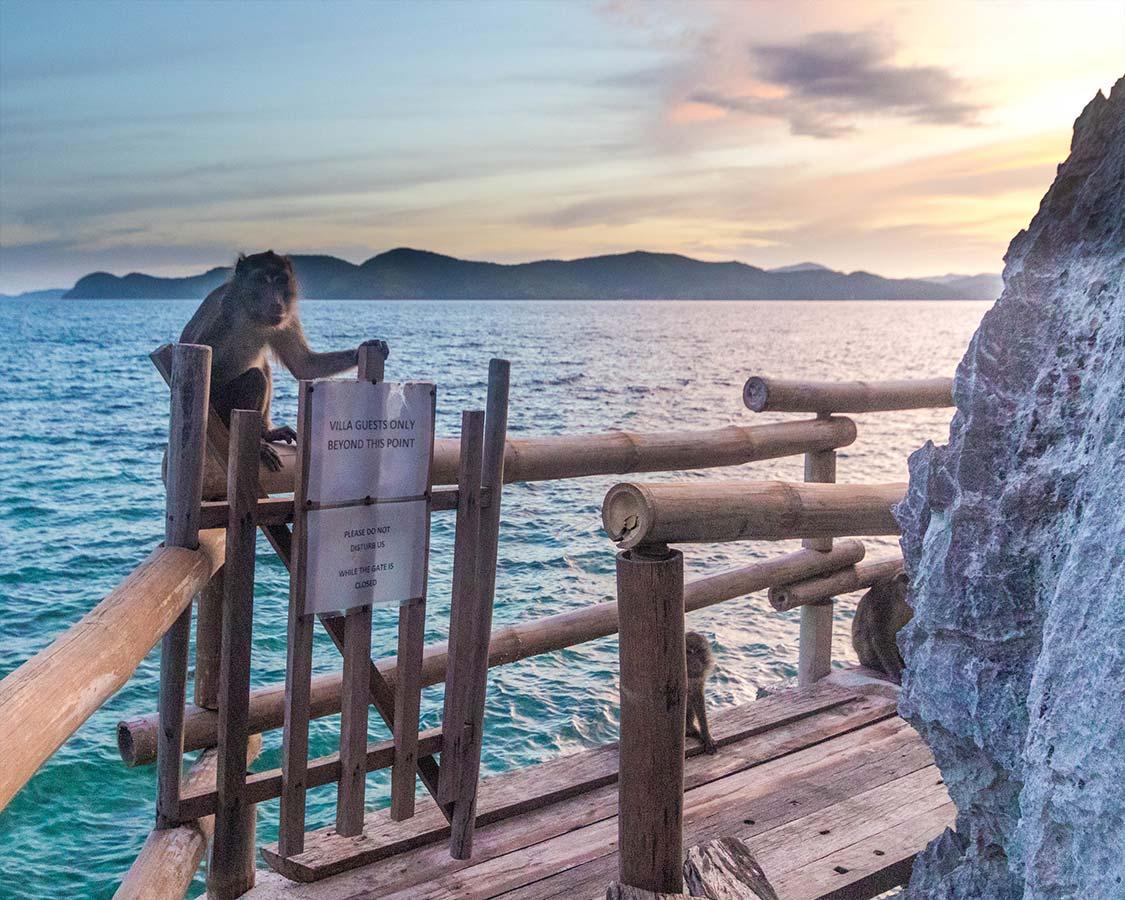 Monkeys on Sangat Island Resort