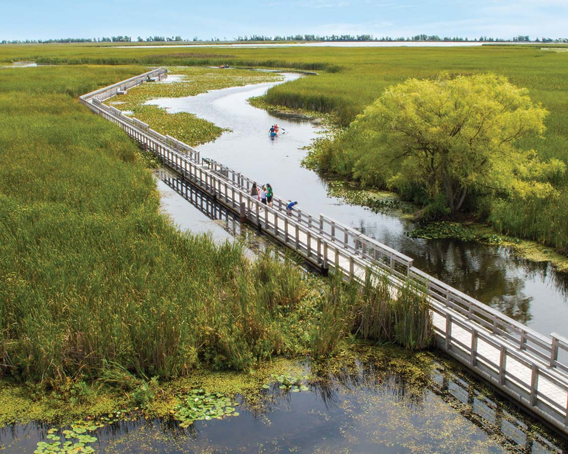 Marsh Boardwalk in Point Pelee National Park