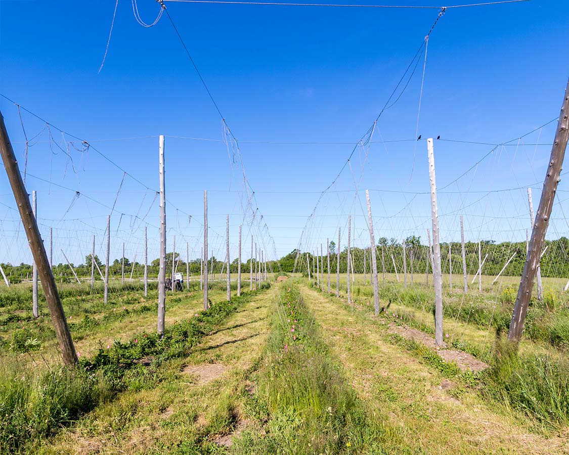 agro-tourism Hops at Fronterra Brewery in Prince Edward County