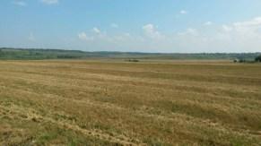 Weizenfelder oft kilometerweit in der Nischni Novgorod Oblast.