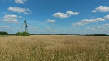 Weizenanbau dominiert in der Nischni Novgorod Oblast, ein riesiges, reiches Land, was bald noch mehr Getreide herstellen will als Kornkammer für die Welt...