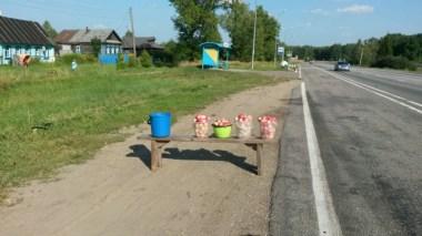 Erst Pfifferlinge, jetzt Äpfel; Saison am Straßenrand, ein so typisch Russisches Bild.