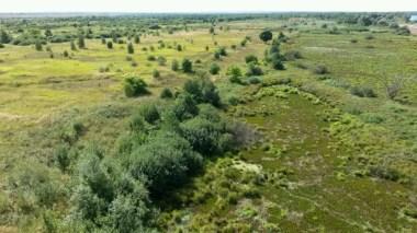 Grün, saftig und so lebendig; jeder Meter dicht bewachsen voller Leben. Mein weites Russland im Duft seines so warmen Sommers, voller Erhabenheit bis (warhaftig) zum Ende der Welt.