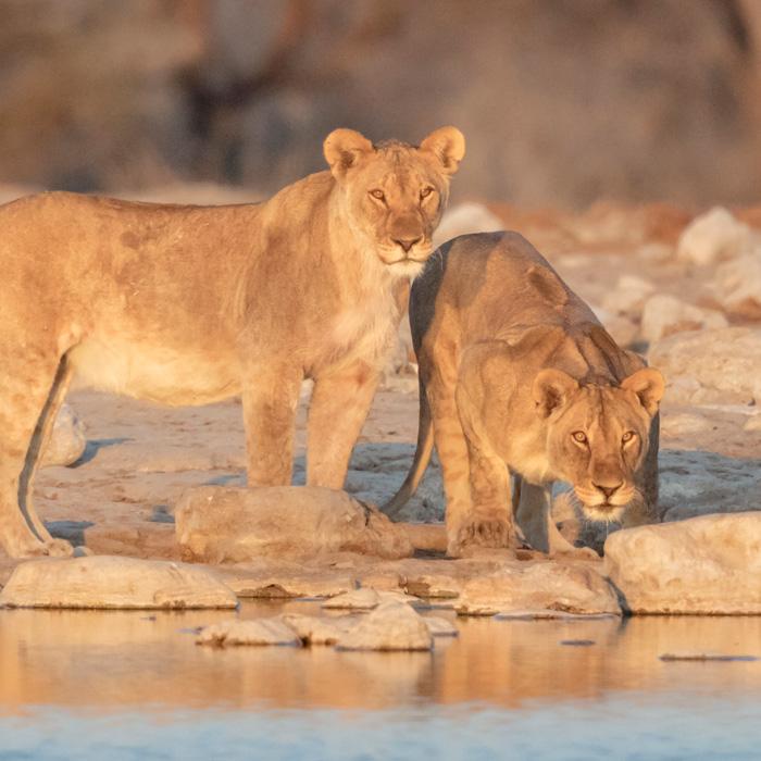Etosha Nat'l Park, Namibia
