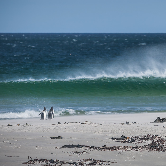 East Falkland, Falkland Islands
