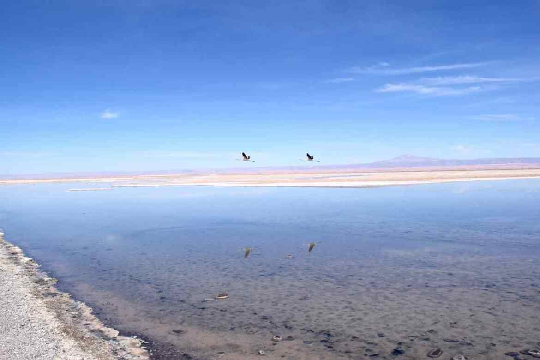 Flamingos flying over Chaxa Lagoon, Chile