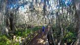 Barley Barber Swamp, Martin County, Florida