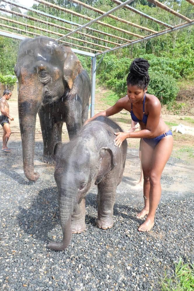 shower elephant jungle sanctuary phuket