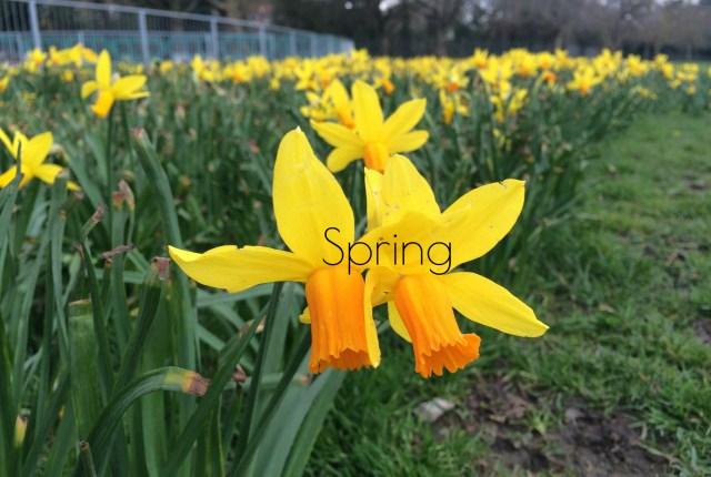 Spring: A Retrospective