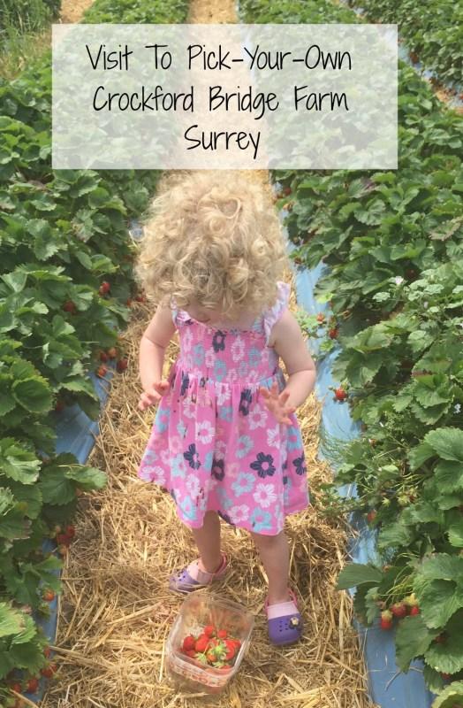 Visit To Pick-Your-Own Farm, Crockford Bridge Farm, Surrey