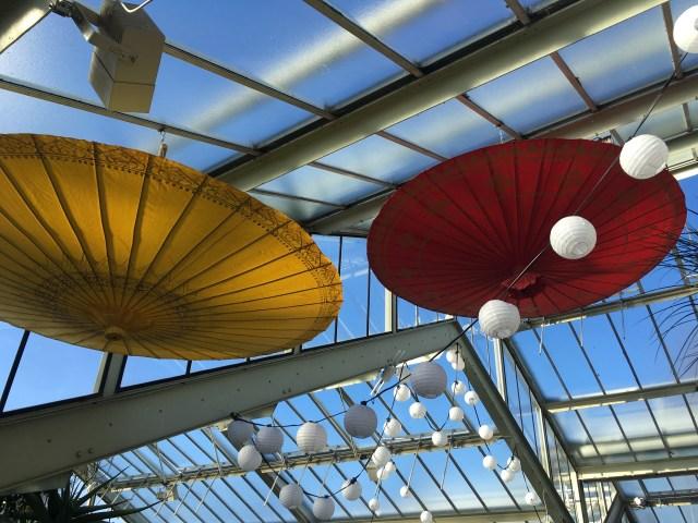 Colourful umbrellas Kew Orchid festival
