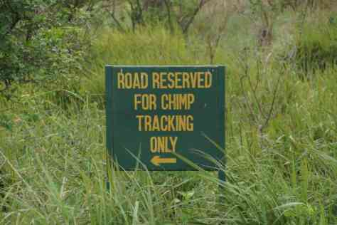 Chimp Tracking, Kyambura Gorge, Uganda