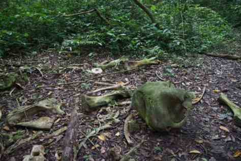 Elephant Graveyard, Kyambura Gorge