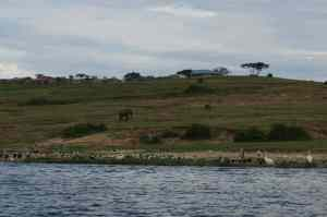 Man and beast coexisting at the Kazinga channel