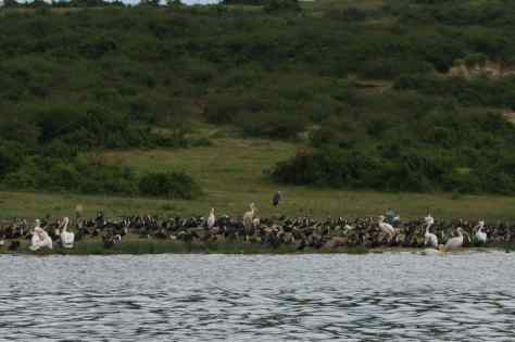 The Kazinga Channel, A Birdwatchers Paradise