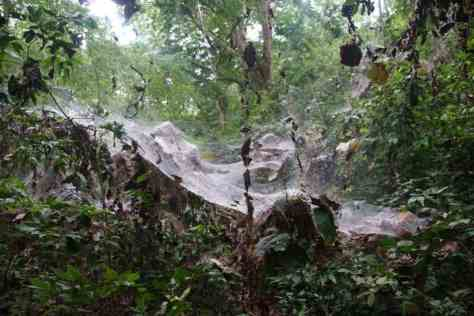 40ft Spiders Web!