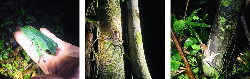 Frogs and Tarantula in the Rainforest