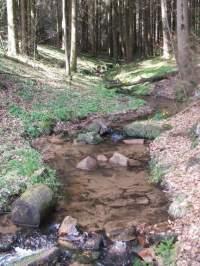 Wandern Pfalz - Reisen, Urlaub, Freizeit im Pflzerwald