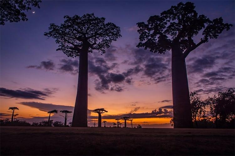 Sunrise at Boabab Avenue in Madagascar
