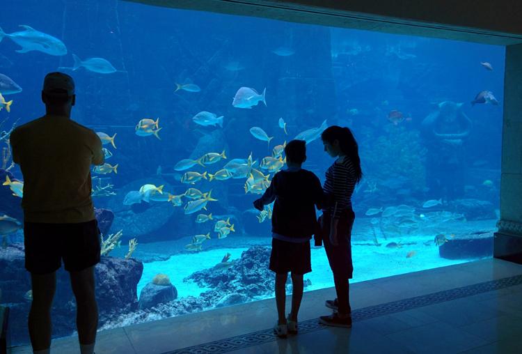 An image of the aquariums at the Atlantis Resort in Nassau, Bahamas