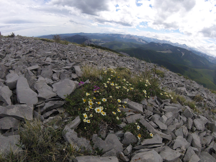 An image of wild flowers at the summit of Prairie Mountain