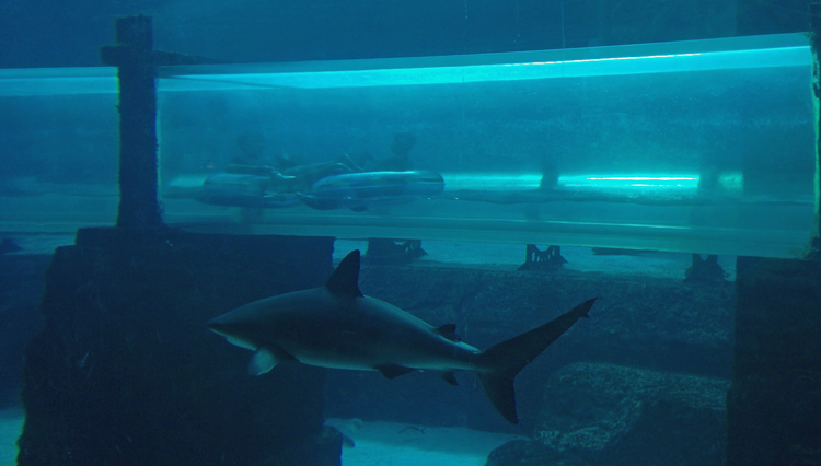 An image of a water slide passing through a shark tank at Atlantis Resort, Paradise Island, Bahamas