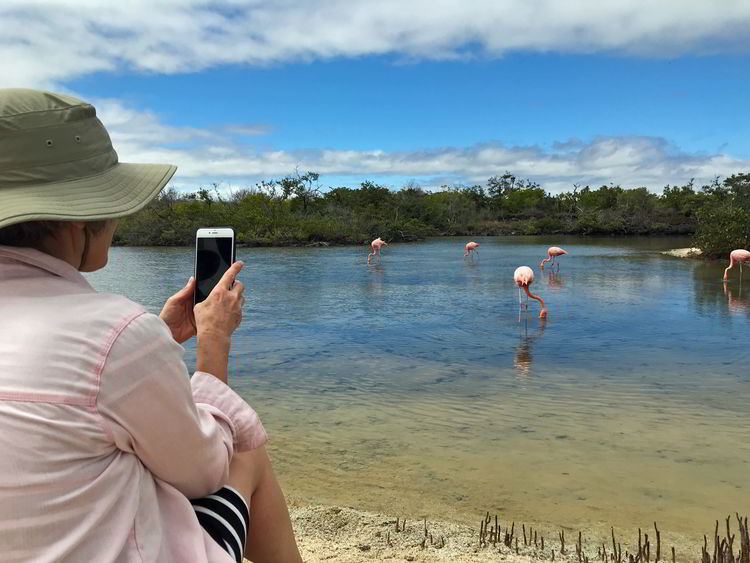 An image of a woman photographing a group of Galapagos Flamingos in the Galapagos Islands