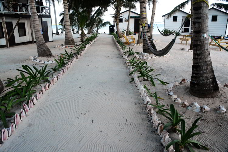 An image of a sandy sidewalk lined with conch shells and palm trees at Tobacco Caye in Belize