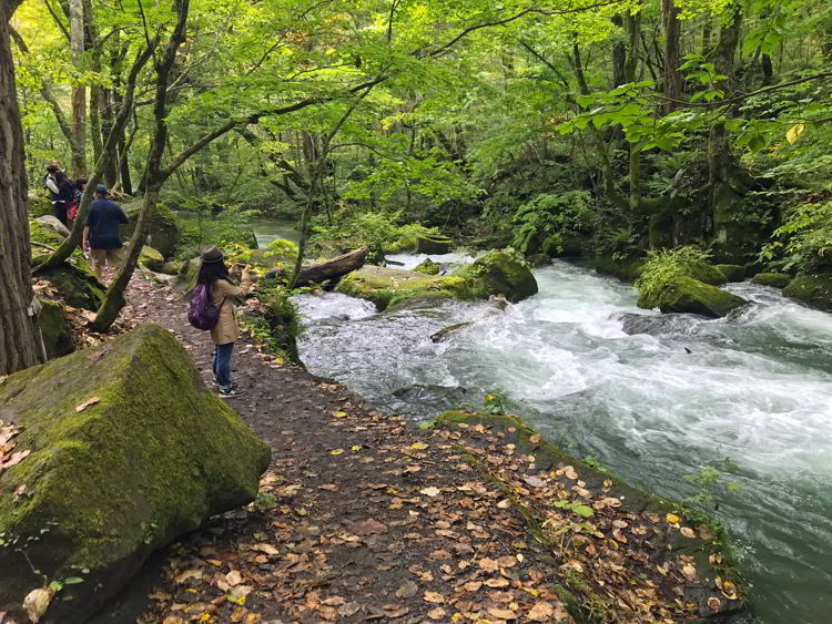An image of Oirase Stream and the trail beside it near Aomori, Japan - Lake Towada and Oirase Gorge