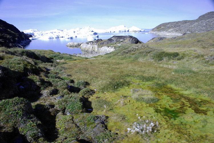An image of the Ilulissat Icefjord in Ilullissat Greenland