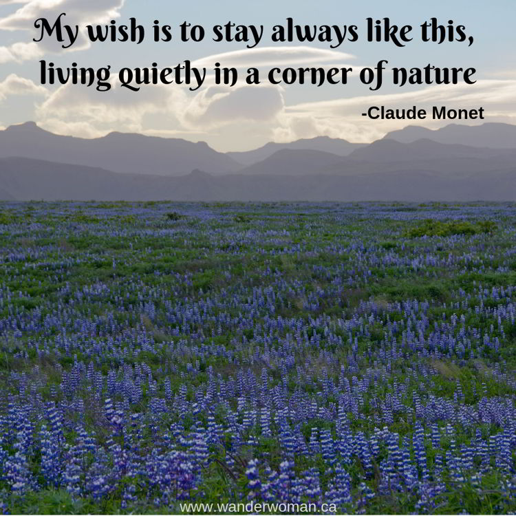 An image of a field of wild lupines in Iceland. Meaningful quotes about nature - My wish is to always stay like this, living quietly in a corner of nature. Claude Monet