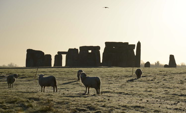 An image of sheep grazing with the Stonehenge site behind them near Salisbury, UK - Stonehenge inner circle tours