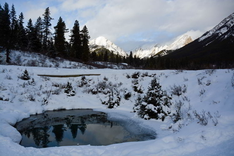 An image of the ink pots in winter in Banff National Park, Alberta - Johnston Canyon Winter Hike and ink pots hike