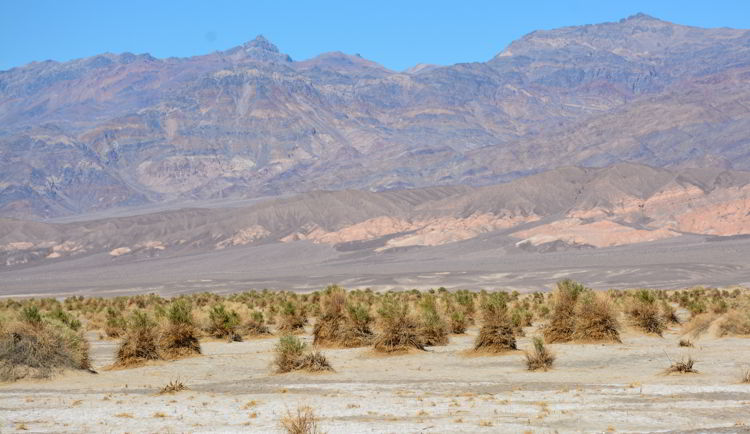 An image of the Devil's Corn Field in Death Valley National Park in California - visiting Death Valley